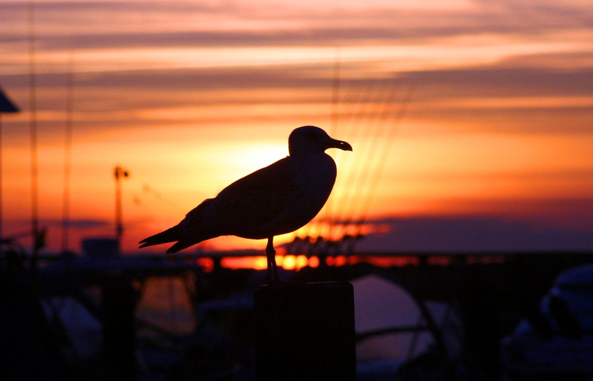 Eine Möwe sitzt in schwedischem Hafen vor einem Sonnenuntergang